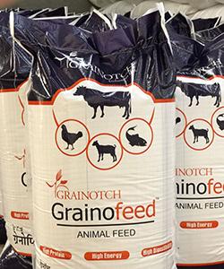 grainofeed1