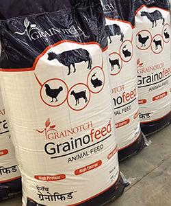 grainofeed3